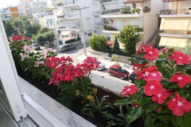 Florile din apartament 1607