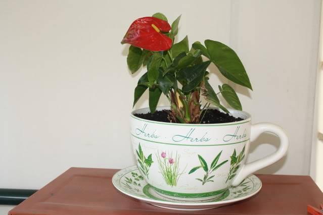 Florile din apartament 1610