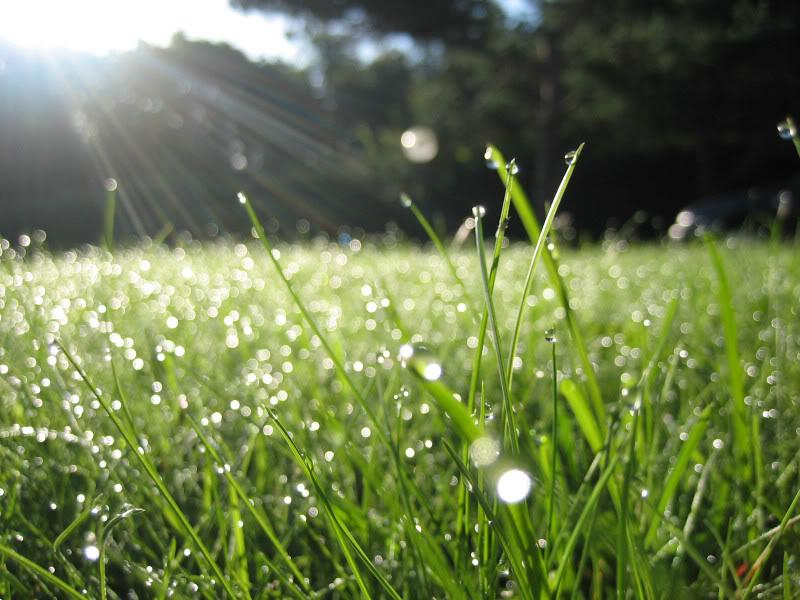 Giọt sương Morning_Dew