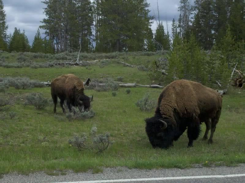 Road trip report: Yellowstone 2013-05-28_16-00-58_317_zpsd1730e58