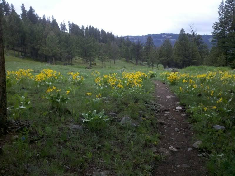 Road trip report: Yellowstone 2013-05-30_08-35-58_767_zps1015eebe