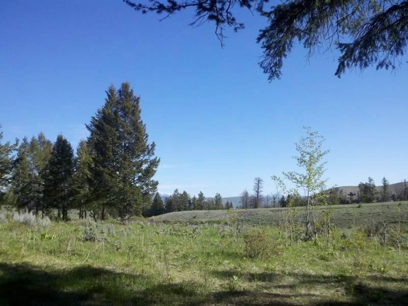 Road trip report: Yellowstone 2013-06-01_08-55-24_428_zps5960e39b