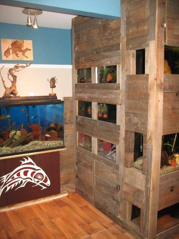 Aquariophile du mois de Septembre Quebec - David Mayotte Fishroom2