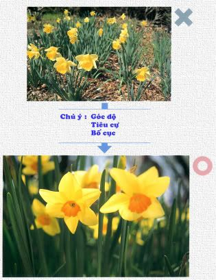 hướng dẫn chụp ảnh căn bản chi tiết 0401