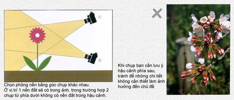 hướng dẫn chụp ảnh căn bản chi tiết 0402-2