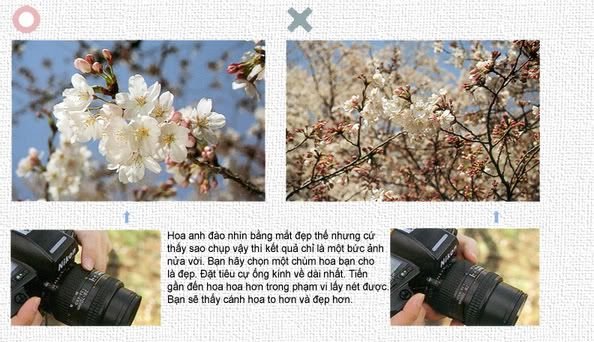 hướng dẫn chụp ảnh căn bản chi tiết 0403-1