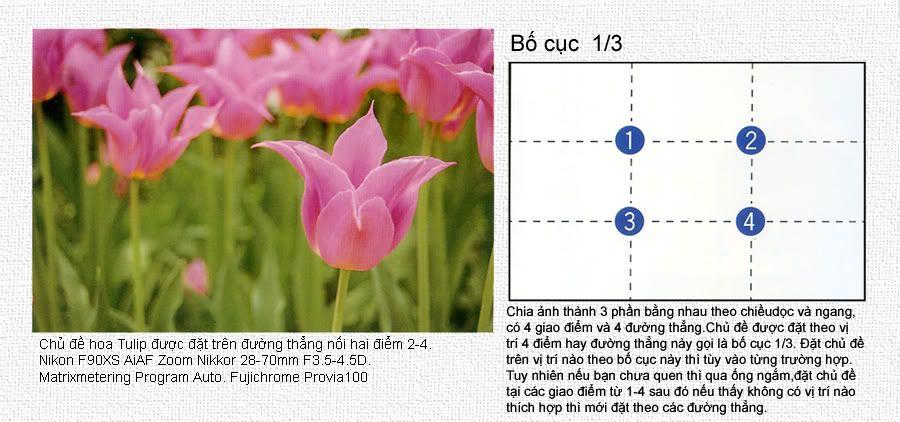 hướng dẫn chụp ảnh căn bản chi tiết 0404-1