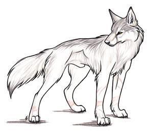 Mana Moriko Wolf