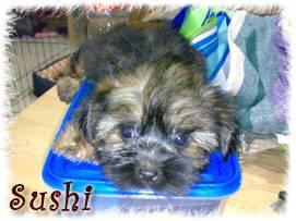 Crossbreed/Hybrid Dogs Heaven! Sushi1stday
