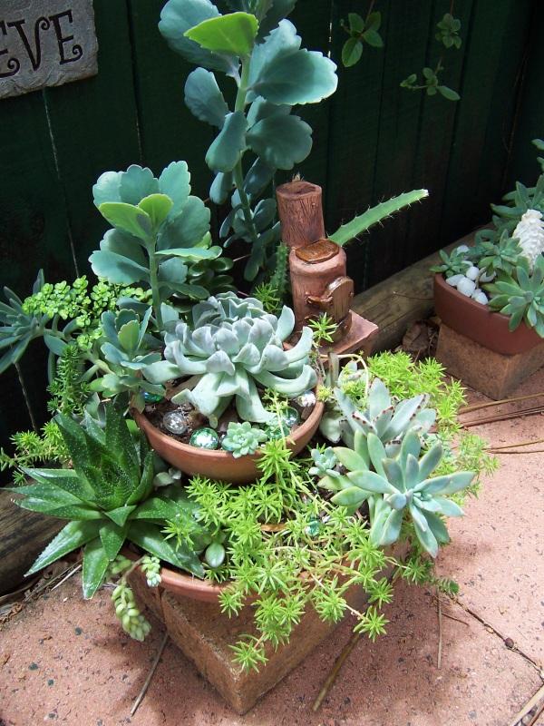 Succulent & Cacti Living Picture 100_4612