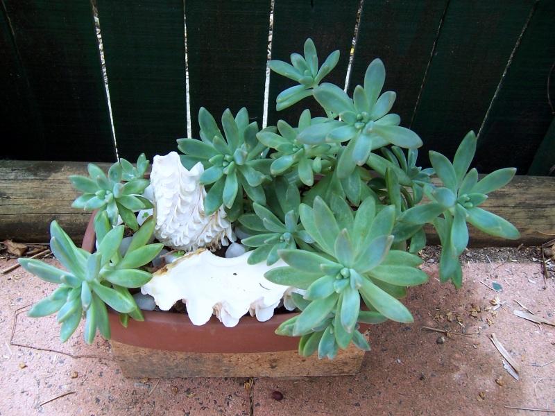 Succulent & Cacti Living Picture 100_4613