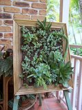 Succulent & Cacti Living Picture Th_100_4610