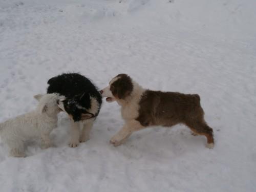 Мои собаки: Зена и Шива и их друзья весты 485158a9b961e462371ebf2ec3f3be64