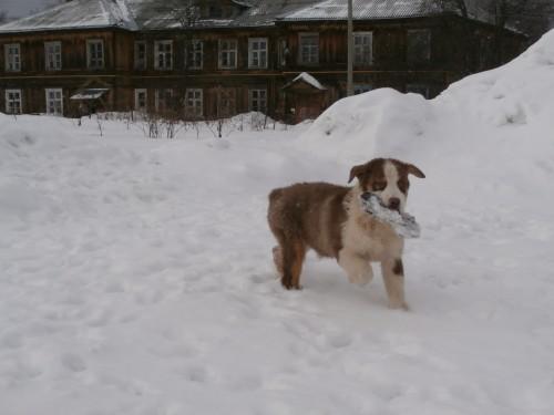 Мои собаки: Зена и Шива и их друзья весты F768e053b652dc949324e27a743e46df