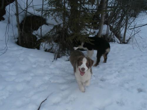 Мои собаки: Зена и Шива и их друзья весты - Страница 2 93ed736bf41a3064a6fa2bb7200dae09