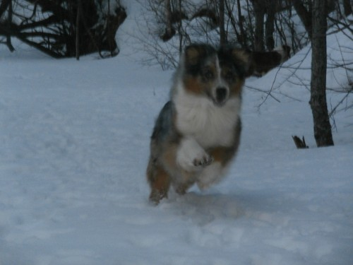 Мои собаки: Зена и Шива и их друзья весты - Страница 2 44620fa63adafa16e32d4ae573780e6b