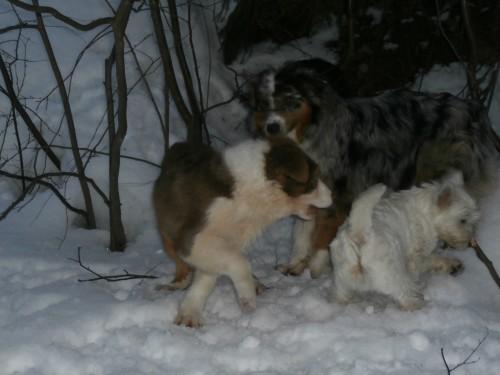 Мои собаки: Зена и Шива и их друзья весты - Страница 2 06bcc7ecefd4c46837e45bd26ba7bf96