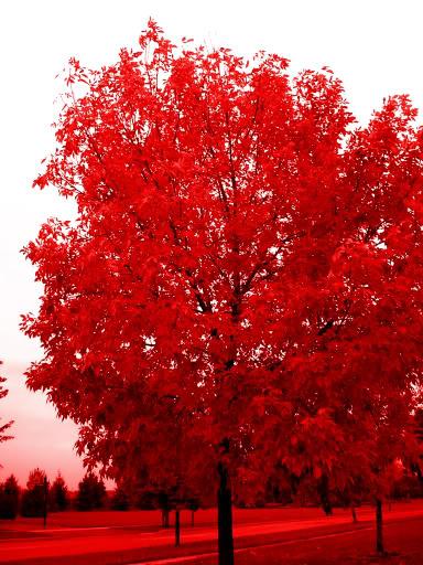 Volim crveno - Page 5 DSCN0253