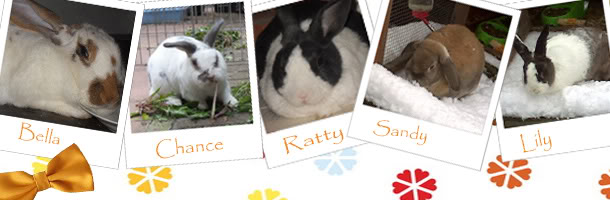 Forum Members Rabbits CharlotteSiggie