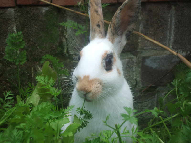 Forum Members Rabbits - Page 3 DSCF0878
