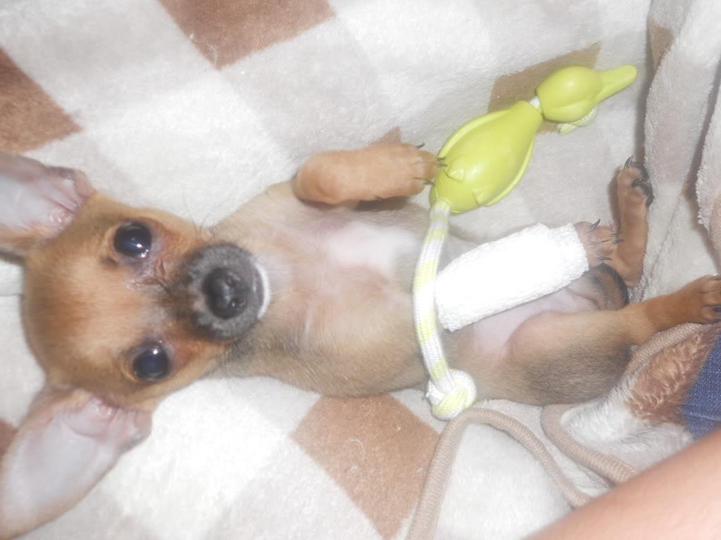 Got a new puppy, broke his foot  DSCN0458
