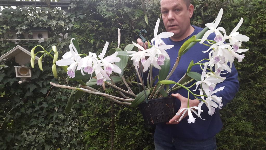 Cattleya maxima x intermedia - Seite 2 20151227_134636_008_zpsmhlhxsfc