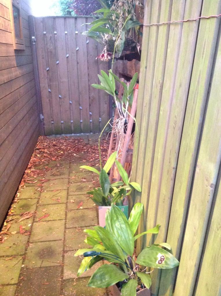 Besuch Jacky orchids, Antwerpen, belgien Imagejpg10_zps62755281
