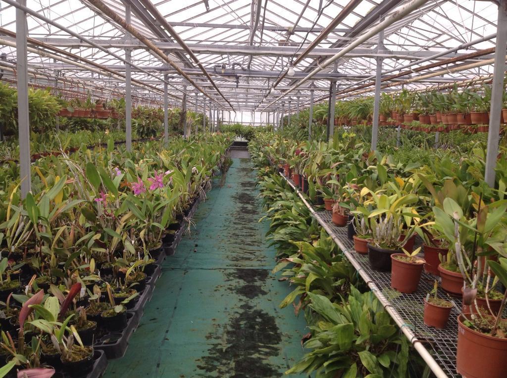 Besuch Jacky orchids, Antwerpen, belgien Imagejpg10_zpseb2996a2