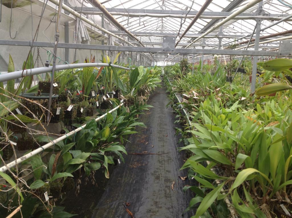 Besuch Jacky orchids, Antwerpen, belgien Imagejpg11_zps59e75fef