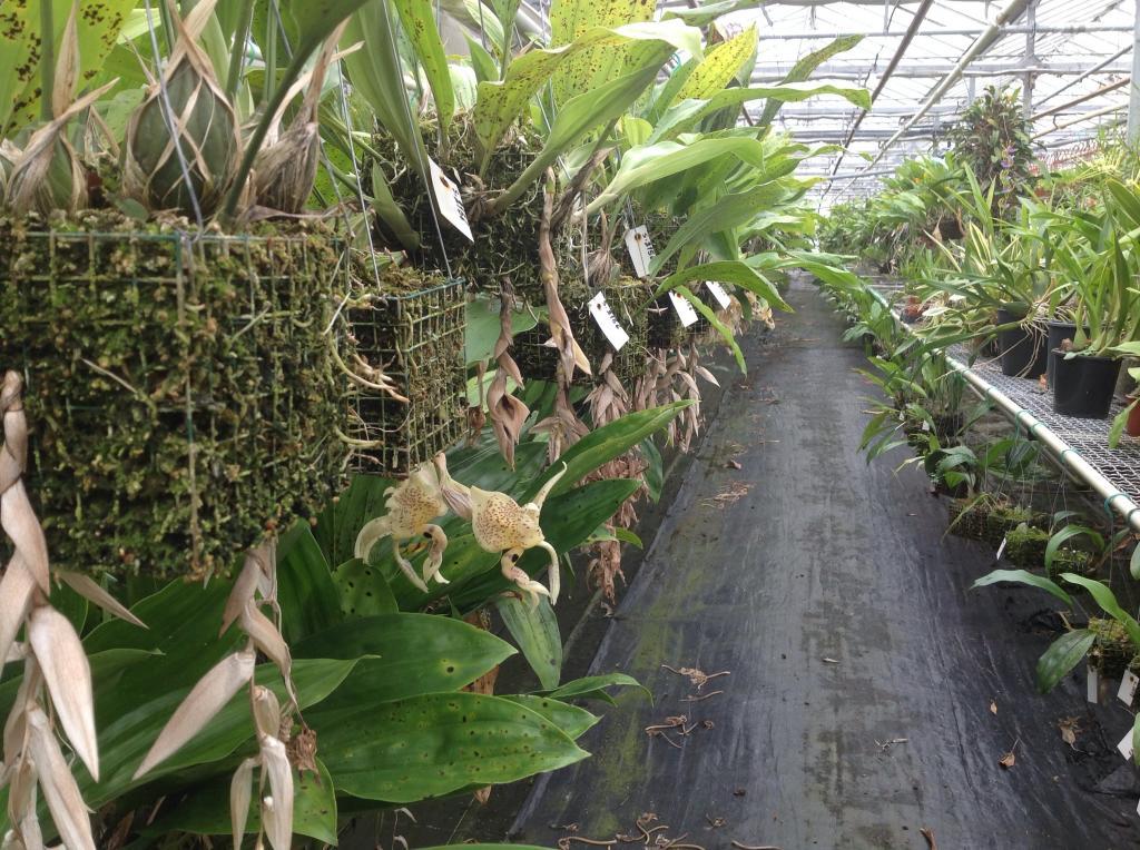 Besuch Jacky orchids, Antwerpen, belgien Imagejpg12_zpsaa6fbcfa