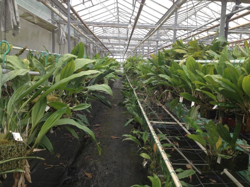 Besuch Jacky orchids, Antwerpen, belgien Imagejpg13_zps5ffece12