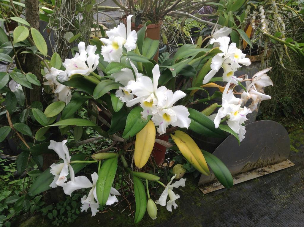 Besuch Jacky orchids, Antwerpen, belgien Imagejpg14_zpsfb047283