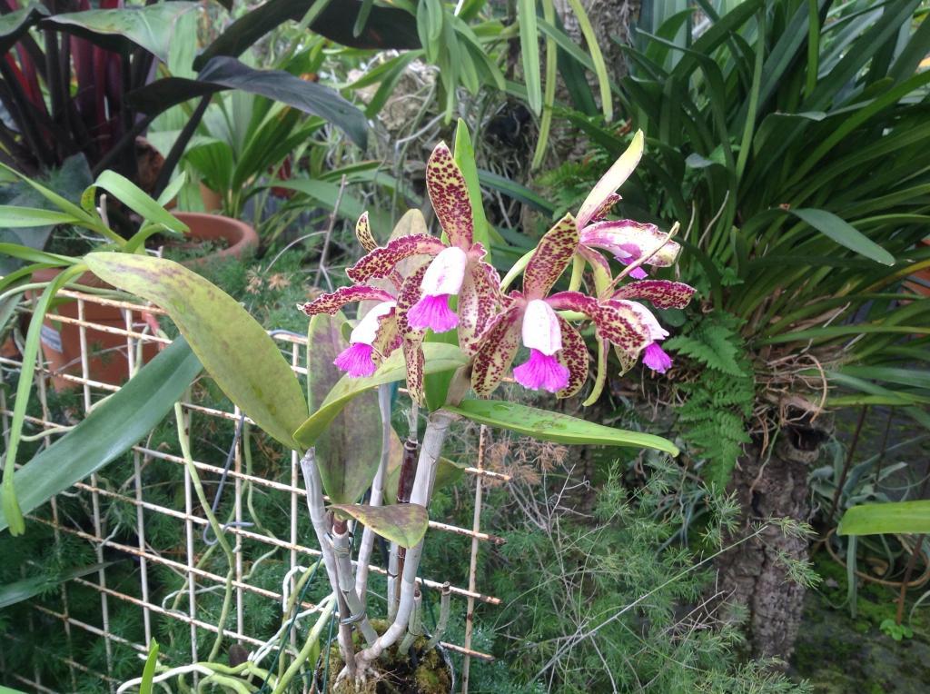 Besuch Jacky orchids, Antwerpen, belgien Imagejpg17_zps7d4d1806