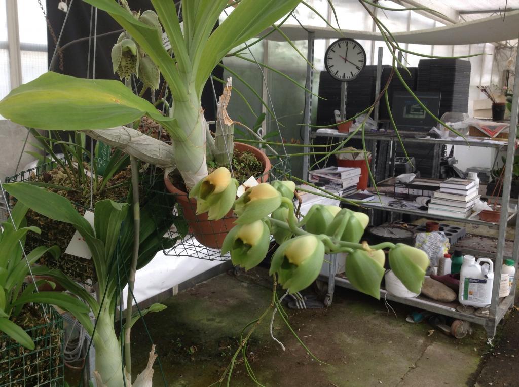 Besuch Jacky orchids, Antwerpen, belgien Imagejpg1_zps4c38e5c6