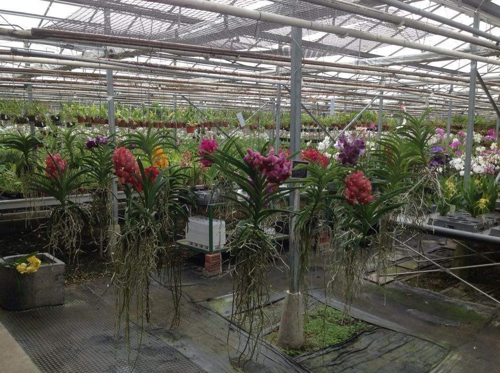 Besuch Jacky orchids, Antwerpen, belgien Imagejpg20_zpscd7508f5