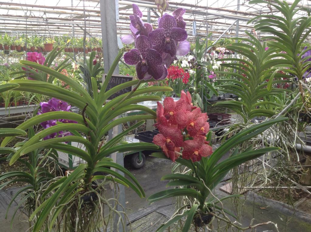 Besuch Jacky orchids, Antwerpen, belgien Imagejpg22_zpseac0e3f3