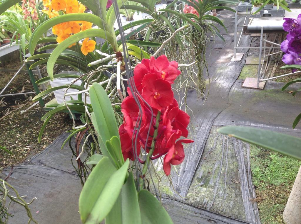 Besuch Jacky orchids, Antwerpen, belgien Imagejpg23_zpsc06b85d2