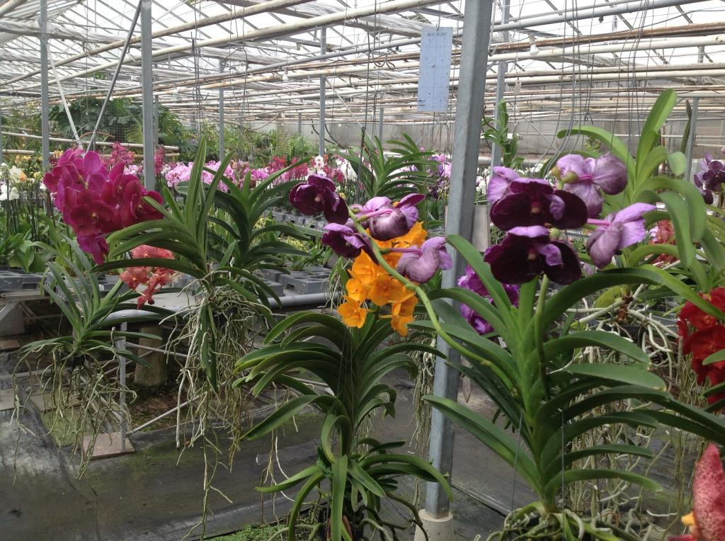 Besuch Jacky orchids, Antwerpen, belgien Imagejpg24_zpsf271d20e