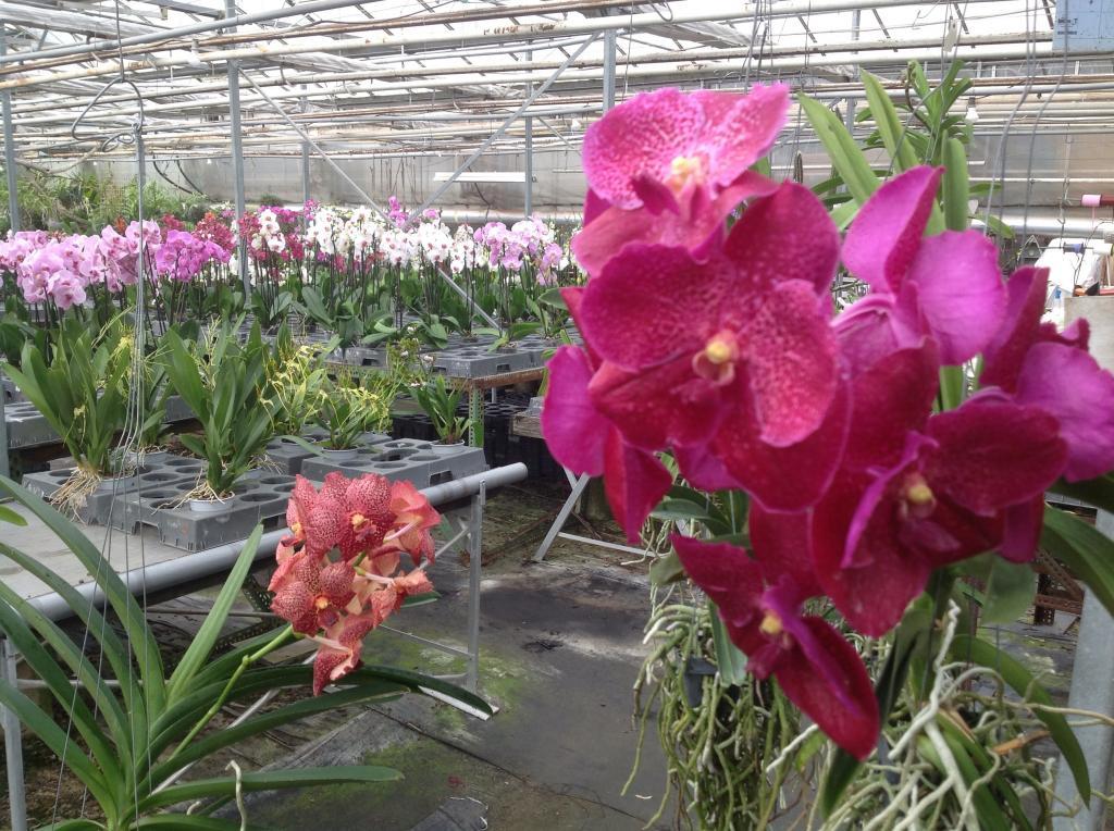Besuch Jacky orchids, Antwerpen, belgien Imagejpg25_zpsd99b5771