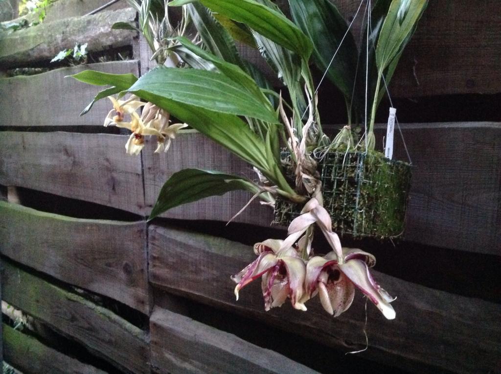 Besuch Jacky orchids, Antwerpen, belgien Imagejpg4_zps7b7f7fb3