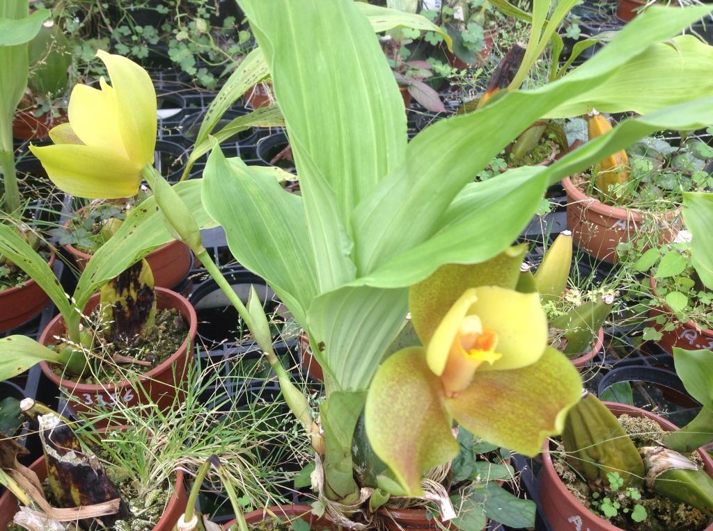Besuch Jacky orchids, Antwerpen, belgien Imagejpg5_zps6fd05e35