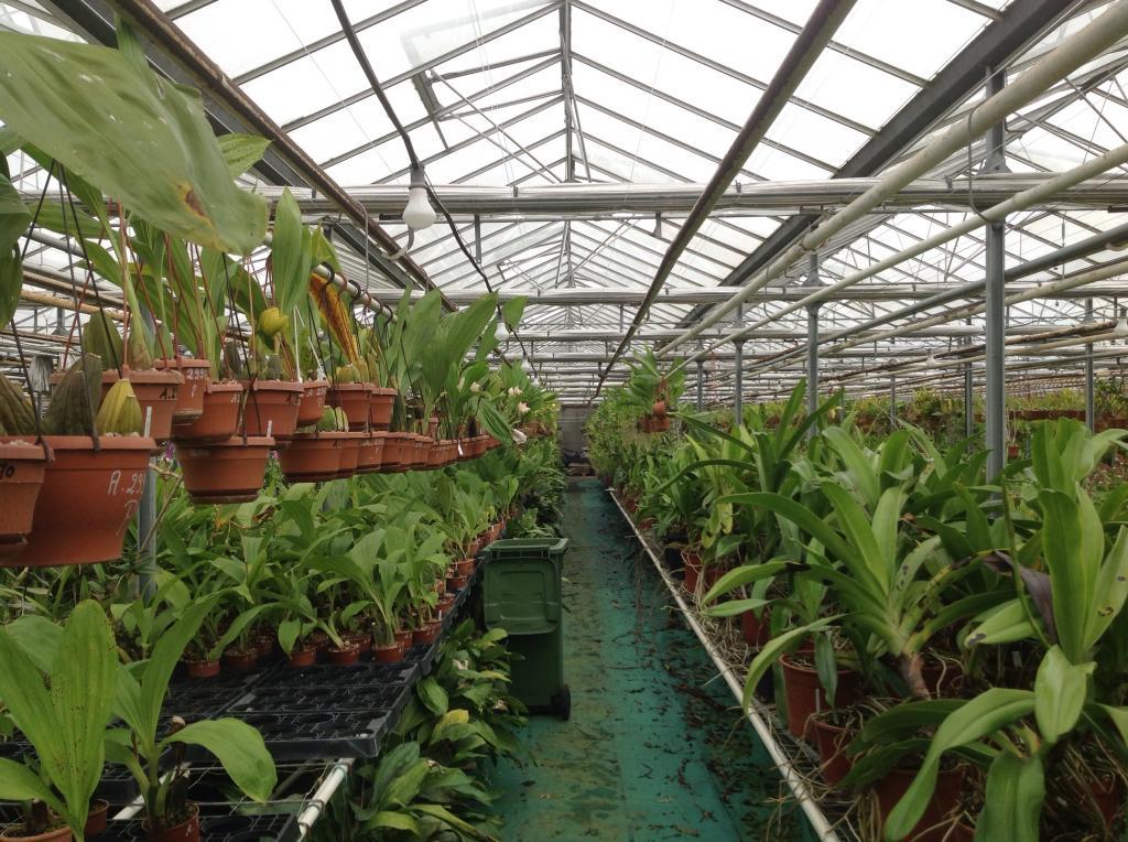 Besuch Jacky orchids, Antwerpen, belgien Imagejpg6_zps491fe625