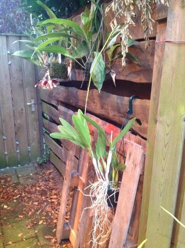 Besuch Jacky orchids, Antwerpen, belgien Imagejpg9_zps46d30624