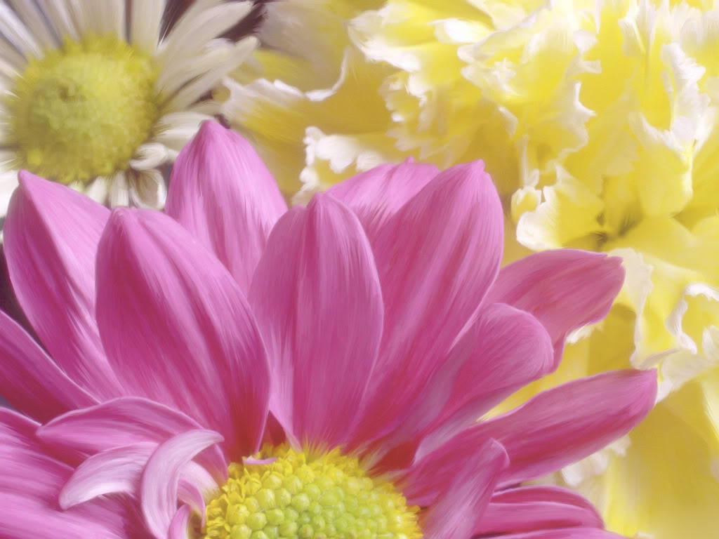 FLOWERS DECORATION Chrysanthemum-morifolium-1600x1200-
