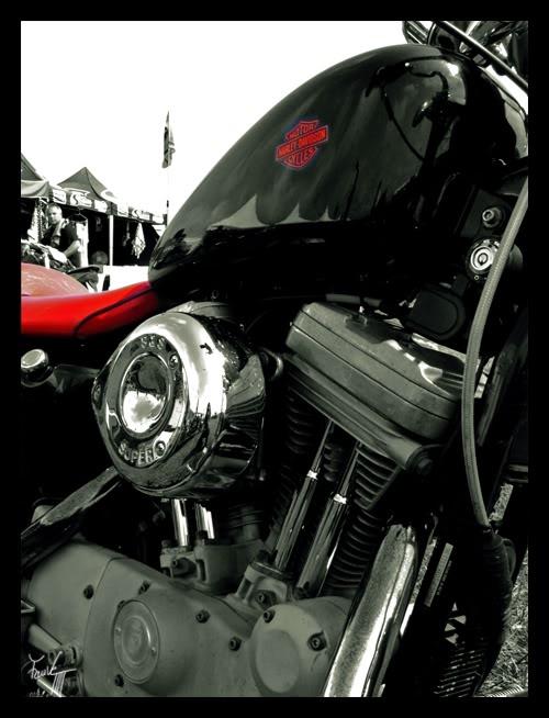 [GALERIE] Fauve Harley-Davidson-1