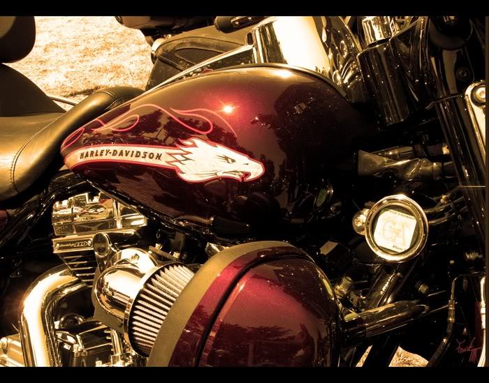 [GALERIE] Fauve Harley-Davidson
