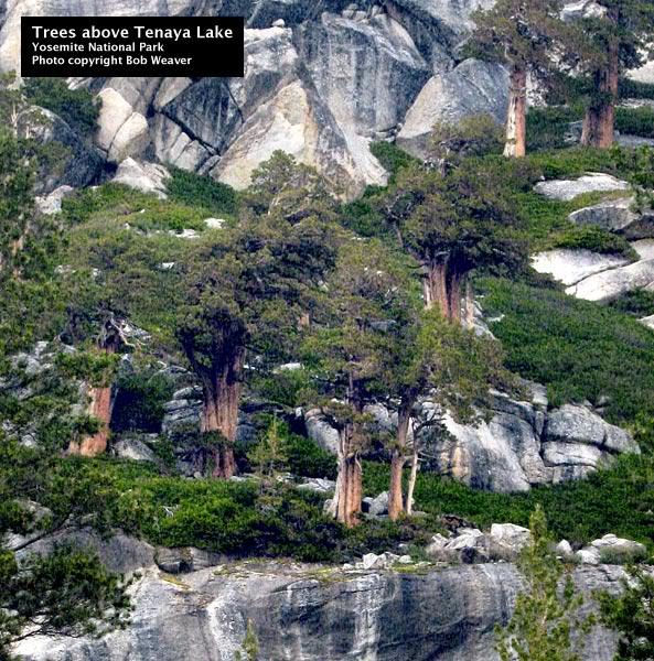இயற்கை அழகு நிறைந்த காட்சிகள்  - Page 6 Treesabovetenayalake