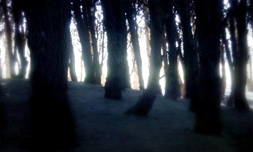 Valle de los Muertos BosqueOscuro
