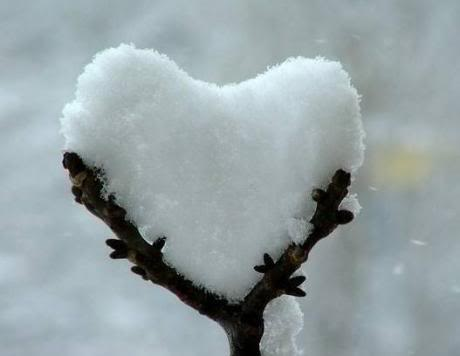 Trees - Page 2 Snow-heart