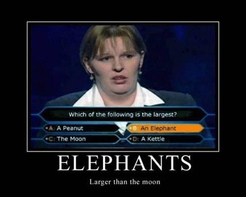 Random Pics! o: Elephants-demotivational-posters